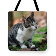 Young Manx Cat Tote Bag by James L. Amos