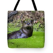 Young River Otter Egan's Creek Greenway Florida Tote Bag by Dawna  Moore Photography