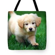 You're Only Young Once Tote Bag by Christina Rollo