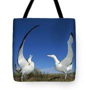 Antipodean Albatross Diomedea Tote Bag by Tui De Roy