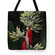 Atlantic Forest Bromeliad Brazil Tote Bag by Mark Moffett