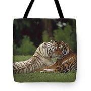Bengal Tiger Panthera Tigris Tigris Tote Bag by Konrad Wothe