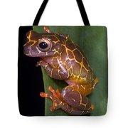 Clown Tree Frog Tote Bag by Dante Fenolio
