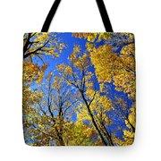 Fall Maple Trees Tote Bag by Elena Elisseeva