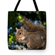 Gray Squirrel Tote Bag by Fabrizio Troiani