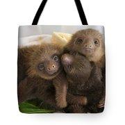Hoffmanns Two-toed Sloth Choloepus Tote Bag by Suzi Eszterhas