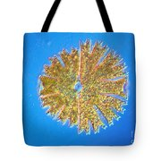 Micrasterias Tote Bag by Michael Abbey and Photo Researchers
