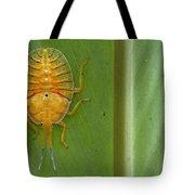 Tessaratomid Nymph Papua New Guinea Tote Bag by Piotr Naskrecki