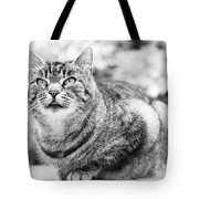 Tomcat Tote Bag by Frank Tschakert