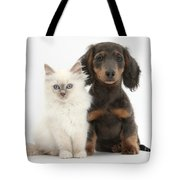Blue-point Kitten & Dachshund Tote Bag by Mark Taylor