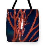 Bright Red Crab On Fan Coral, Papua New Tote Bag by Steve Jones