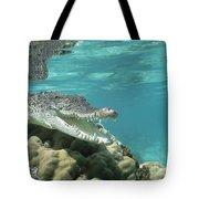 Saltwater Crocodile Crocodylus Porosus Tote Bag by Mike Parry