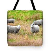 Sheeps Tote Bag by MotHaiBaPhoto Prints