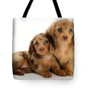 Dachshund Pups Tote Bag by Jane Burton