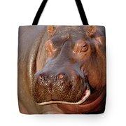 Hippopotamus Hippopotamus Amphibius Tote Bag by Gerry Ellis