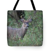6 Point Buck Tote Bag by David Murray
