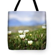 Alpine Meadow In Jasper National Park Tote Bag by Elena Elisseeva
