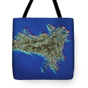 Amoeba Proteus Lm Tote Bag by Eric V. Grave