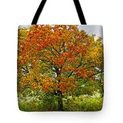 Autumn Maple Tree Tote Bag by Elena Elisseeva