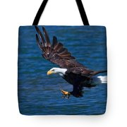 Bald Eagle On The Hunt Tote Bag by Beth Sargent