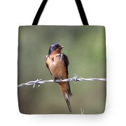 Barn Swallow - Looking Good Tote Bag by Travis Truelove