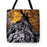 Big Autumn Tree In Fall Park Tote Bag by Elena Elisseeva