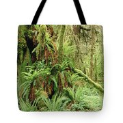 Bigleaf Maple Acer Macrophyllum Trees Tote Bag by Gerry Ellis