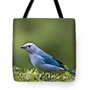 Blue-grey-tanager Tote Bag by Heiko Koehrer-Wagner