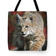 Bobcat Felis Rufus Tote Bag by David Ponton