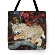 Bobcat Walks On Branch Through Hawthorn Tote Bag by David Ponton