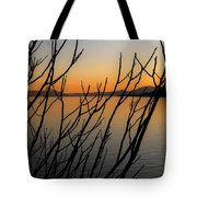 Branches In The Sunset Tote Bag by Joana Kruse