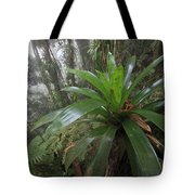 Bromeliad And Tree Ferns Colombia Tote Bag by Cyril Ruoso