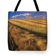 Canola Field, Tiger Hills, Manitoba Tote Bag by Dave Reede