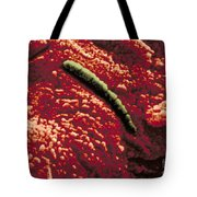 Carbonate Glob Of Meteorite Tote Bag by Nasa