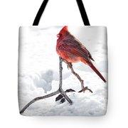 Cardinal In Snow Tote Bag by Tamyra Ayles