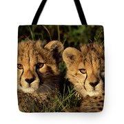 Cheetah Acinonyx Jubatus Two Cubs Tote Bag by Peter Blackwell