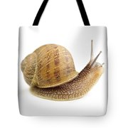 Curious Snail Tote Bag by Elena Elisseeva