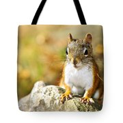 Cute Red Squirrel Closeup Tote Bag by Elena Elisseeva