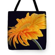 Daisy Of Joy Tote Bag by Juergen Roth