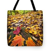 Fall Leaves In Forest Tote Bag by Elena Elisseeva