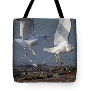Fighting Gulls Tote Bag by Karol  Livote