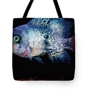 Fish Swim Joy  In Denmark Tote Bag by Colette V Hera  Guggenheim