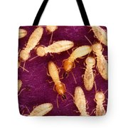 Formosan Termites Tote Bag by Science Source
