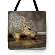 Fox Squirrel Tote Bag by Lori Tordsen