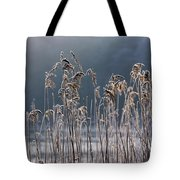 Frozen Reeds At The Shore Of A Lake Tote Bag by John Short
