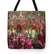 Gladioli Garden In Early Fall Tote Bag by Yva Momatiuk and John Eastcott and Photo Researchers