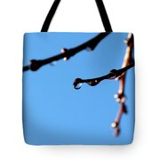Glistening Dewdrops Tote Bag by Will Borden