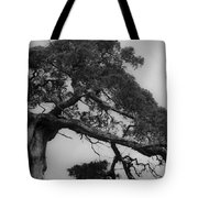 Gnarly Cedar Tree Tote Bag by Teresa Mucha