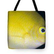 Golden Damsel Close-up, Papua New Tote Bag by Steve Jones