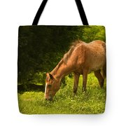 Grazing Horse Tote Bag by Charuhas Images